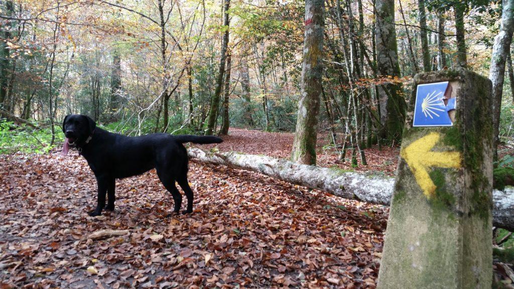 En en Camino también puedes encontrar peregrinos con perro.